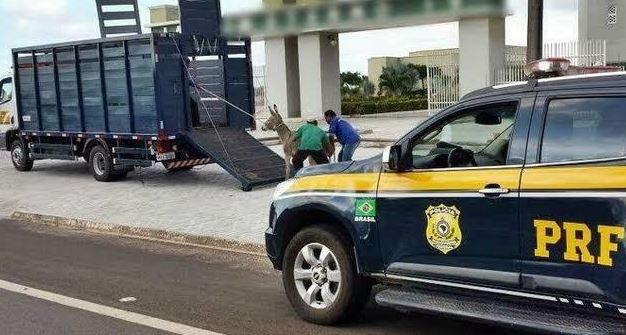 PRF-PI reduz o número de acidentes causados por animais na pista em 2018