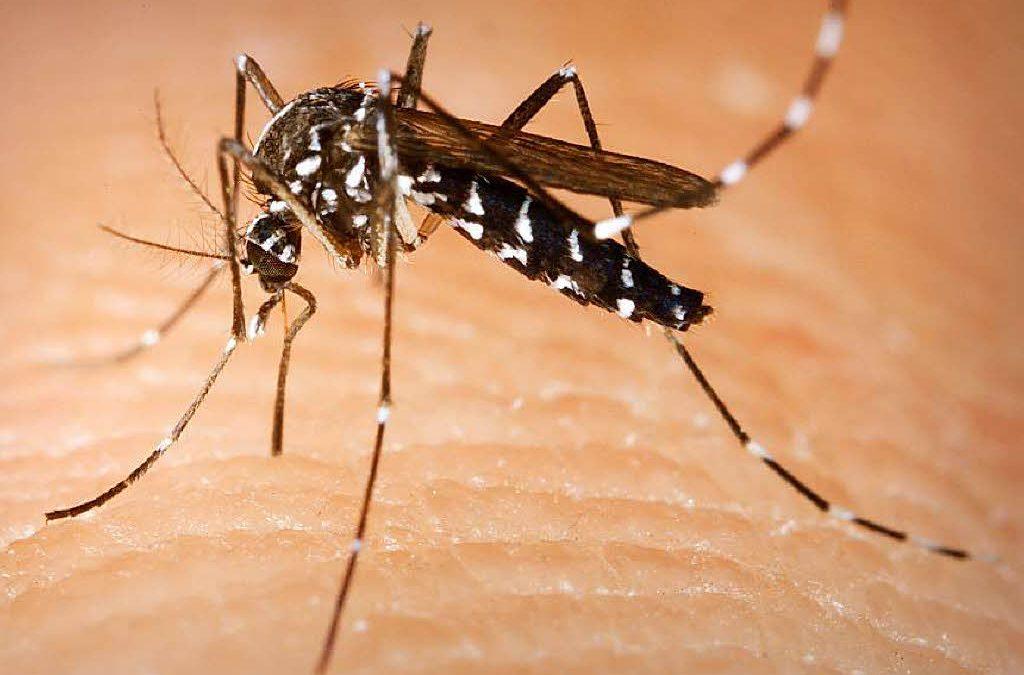 Vírus da Zika traz prejuízos motores e de memória a adultos